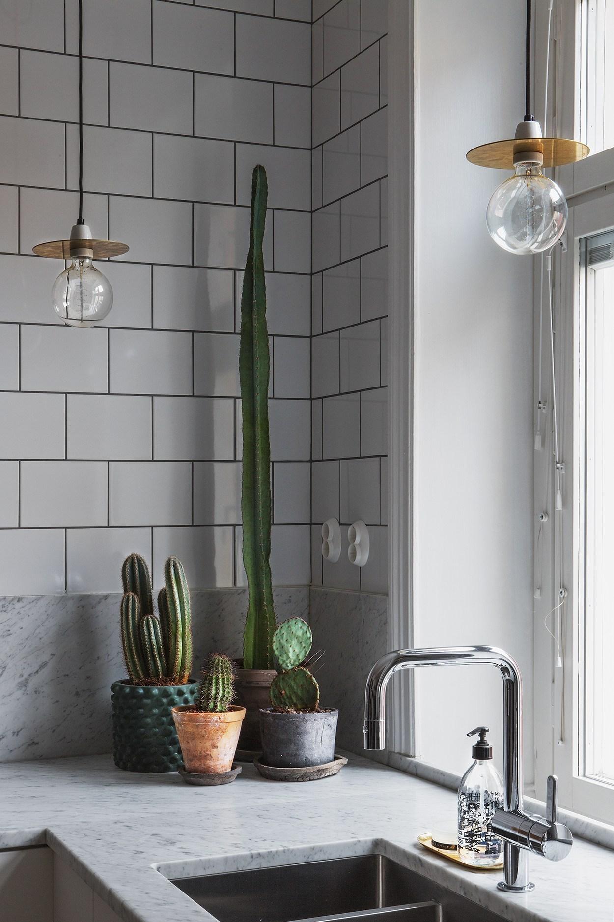 skandináv lakberendezés kaktusz