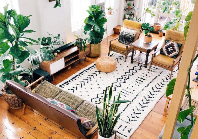 skandináv szobanövény trend